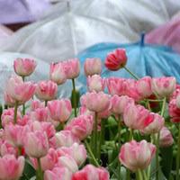 Gardening Zones Usa - gardening in the pacific northwest region