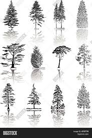 pine tree silhouette images illustrations vectors pine tree