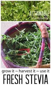 4937 best best gardening tips from gardeners images on pinterest