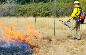 sound native plants fire starters using flames to clear way for prairie u0027s native