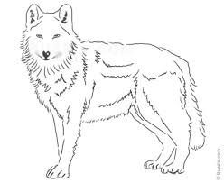 easy wolf drawings in pencil gallery clip art library