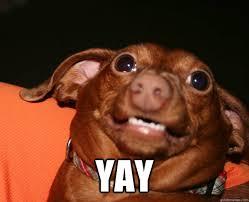 Yay Meme Face - yay yay dog quickmeme