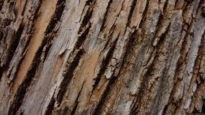 birch bark wallpaper the best image wallpaper 2017