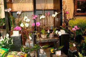 Flowers Nyc Orchids Roses Lucky Bamboo Bonsai U0026 Echeveria U2013 Scotts