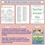 rna and protein synthesis worksheet dna rna protein synthesis