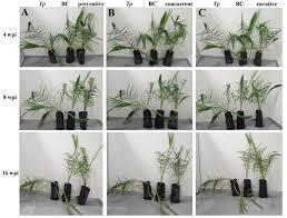 frontiers streptomyces globosus uae1 a potential effective