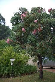 8 best australian native gardens images on pinterest australian