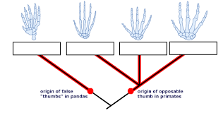 homolgy and analogy understanding evolution