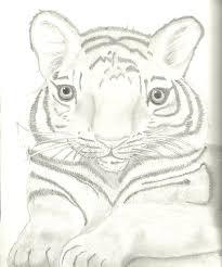 baby tiger sketch by belinda32 on deviantart