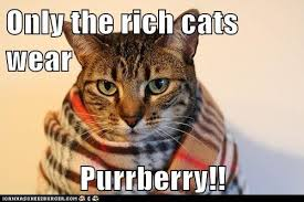 Rich Cat Meme - only the rich i can has cheezburger funny cats cat meme cat