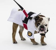 25 funny halloween costumes for dogs