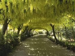 flower garden japan path trees yellow nature flowers scenery