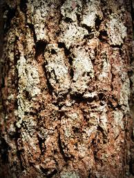 free images tree nature forest branch abstract board wood