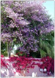 tropical flowering trees flowering trees flowering florida