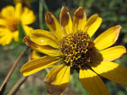 missouri native plants explore missouri