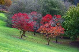Mt Lofty Botanic Gardens Adelaide South Australia Mount Lofty