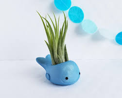blue whale air plant holder air planter air plant holder best