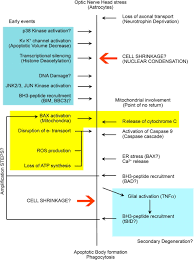 the cell and molecular biology of glaucoma mechanisms of retinal