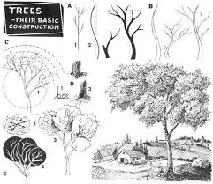 75 best how to draw realistic trees plants bushes and rocks