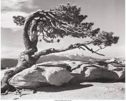 ansel adams yosemite and the range of light poster five for friday ansel adams photography work stands test of time