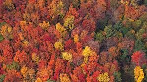 colorful trees road select 4k aerials
