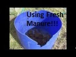how to use fresh chicken manure in the garden youtube