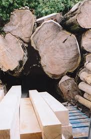 lade wood would wood la pronunciaci祿n de could should y would habla