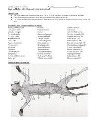 cat muscles diagram cat anatomy muscles quiz human anatomy