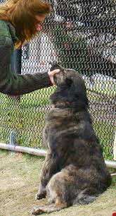 Fear Barking Dog Problem 10 Steps to a Solution