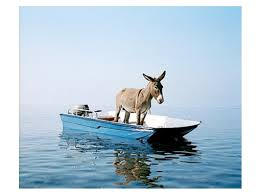 Nautical Themed Pashmina - donkey u0027s on a boat and its going fast and oh wait he forgot his