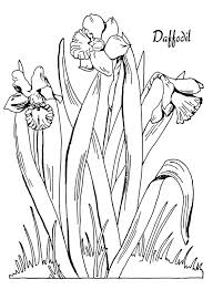 daffodil free flower coloring page flower coloring pages of