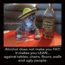 Drunk Cat Meme - alcohol makes you lean drunk humor cat meme humor memes com