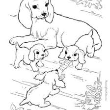 coloring pages farm animals babies archives mente