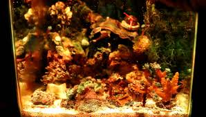 led lighting for zoanthids high power 10 watt led reef grow light for corals sps lps zoanthid