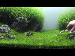 Aquascaping Tools 74 Best Vissiessssss Images On Pinterest Aquarium Ideas