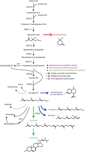 production and quantification of sesquiterpenes in saccharomyces