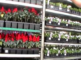 nancy today shopping at lowes gardening center youtube