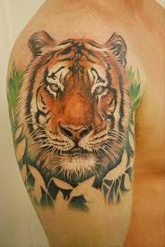 portrait tiger on shoulder