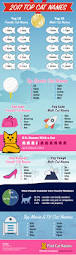 top cat names of 2017 infographic find cat names