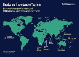 Shark Map Of The World by Shark Fin Trade Why It Should Be Banned In The United States