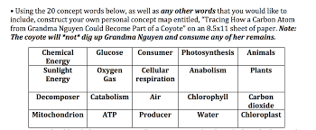 Photosynthesis Concept Map Using The 20 Concept Words Below As Well As Other Chegg Com