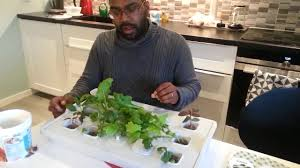Ikea Hydroponics Garden Testing Out Ikea Hydroponic Part3 Youtube