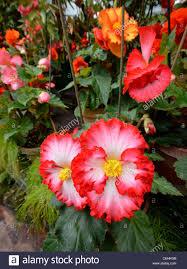 southern hemisphere flowers in auckland domain u0027s winter garden