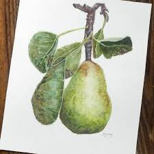 pear home decor pear in a pear tree actual watercolor painting 8x10 inch floral