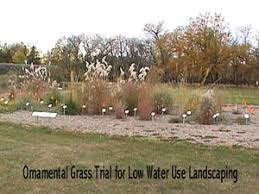 landscaping with ornamental grasses