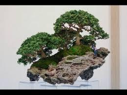 best plants for bonsai rock planting youtube