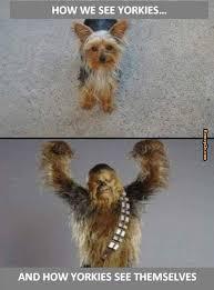 Chewbacca Memes - yorkie memes chewbacca memes yorkie love pinterest