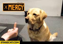 Middle Finger Meme Gif - cat middle finger funny gif