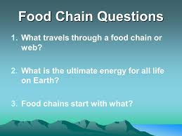 what travels through a food chain or web images Ecology unit ppt video online download jpg