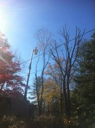 129 best clean cut services images on tree experts in